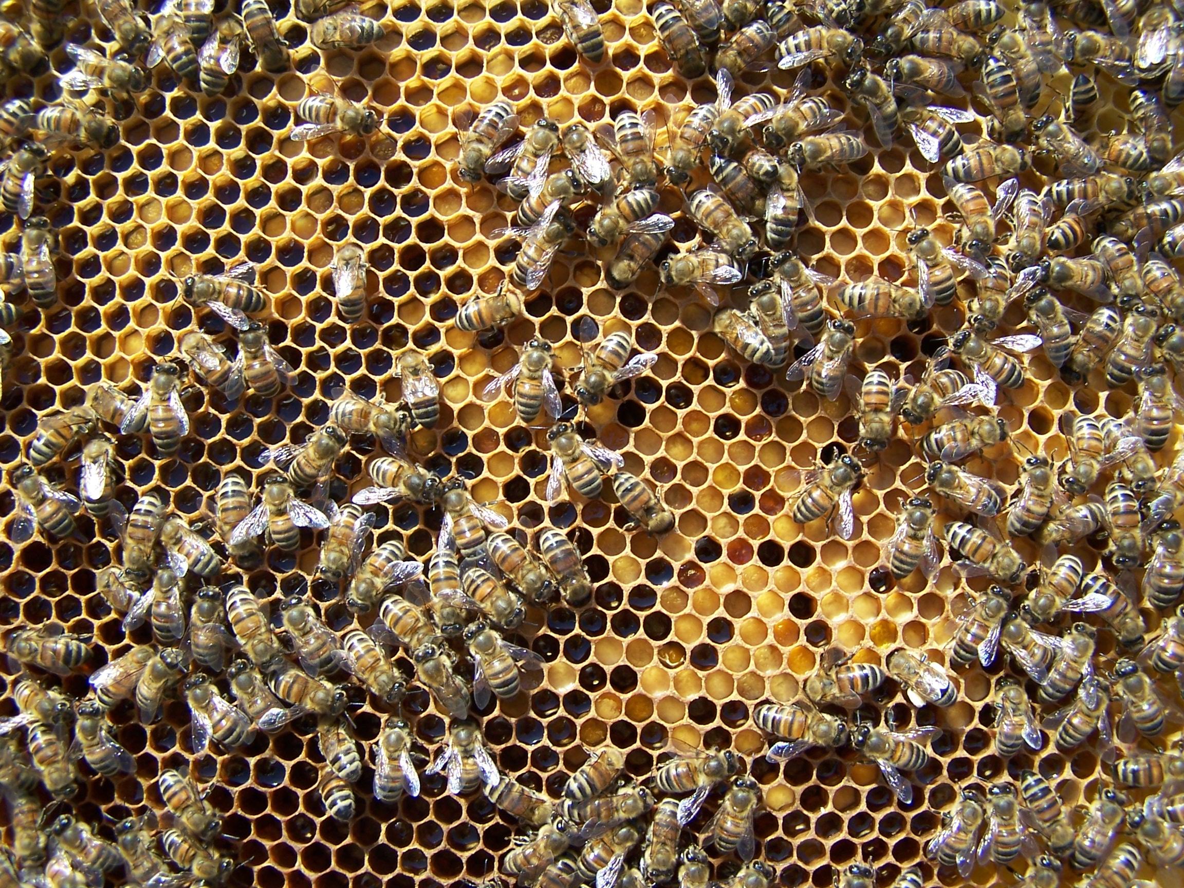 Polline spettacolo