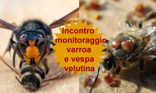 Programmazione monitoraggio Varroa e Vespa Velutina – Venerdi 5 Maggio ore 20:00 c/o Az. Stuard (PR)