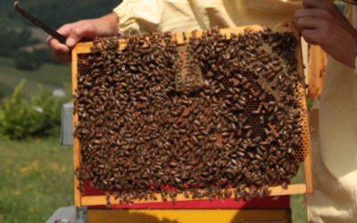 """Incontro sulle """"Tecniche per il blocco di covata e controllo della Varroa"""" – 26/06/19 ore 21:00 c/o Az. Stuard"""