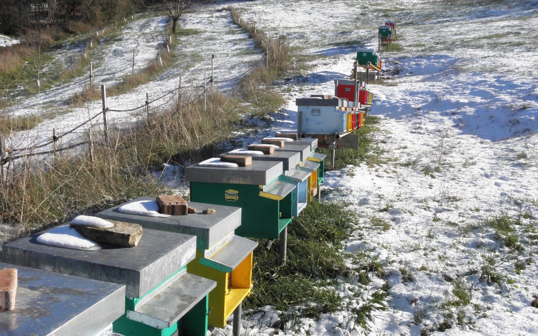 Incontro sull'Invernamento: azioni e accorgimenti. 11 Ottobre ore 20:30 Cavriago