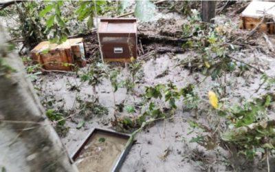 Raccolta fondi per apicoltori alluvionati del Piemonte